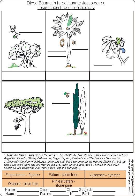 b ume in israel trees in israel jesus kennt sie. Black Bedroom Furniture Sets. Home Design Ideas