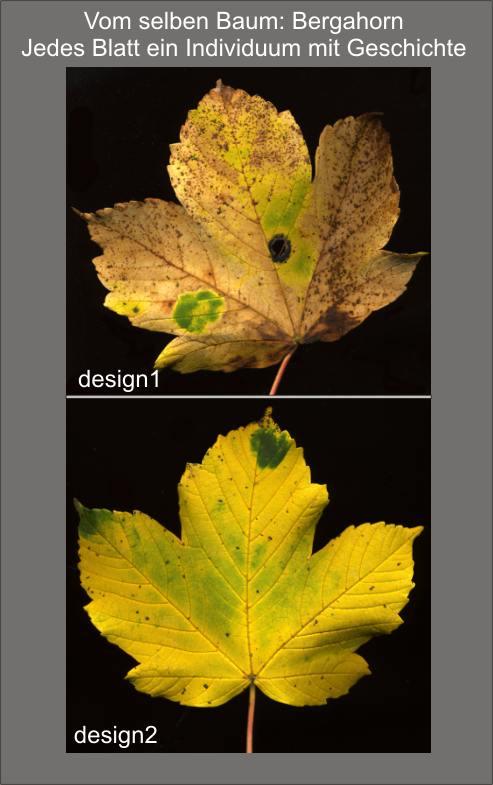 Herbstbl 228 Tter Bestimmen Mit Schattenbild