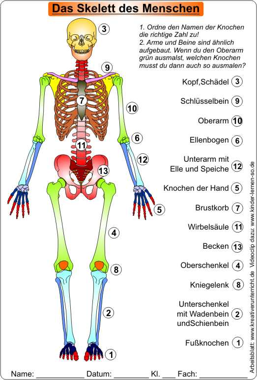die knochen des skeletts skeleton of men video clip