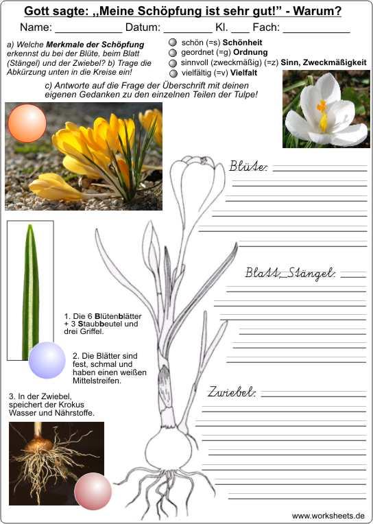 download Систематика высших растений