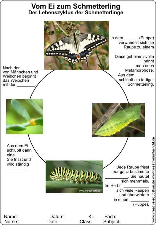 Vom Ei zum Schmetterling - Lebenszyklus der Schmetterlinge