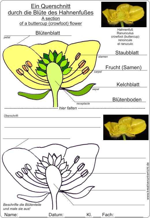 Bastelanleitung für eine Blume mit Blütenmodell