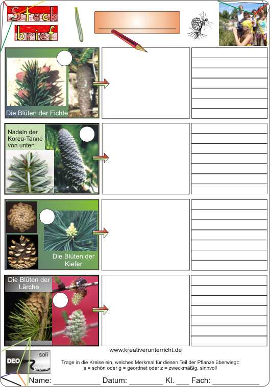 Steckbrief Nadelbu00e4ume characteristics of conifers
