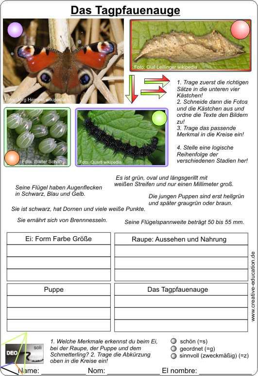 Tagpfauenauge Videoclip + Arbeitsblatt